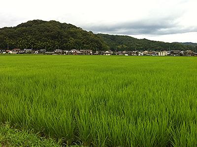 日高町の田んぼ